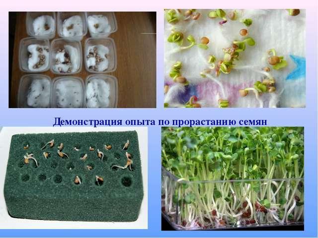 Демонстрация опыта по прорастанию семян