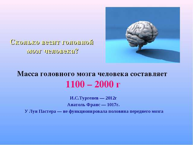 Сколько весит головной мозг человека? Масса головного мозга человека составля...