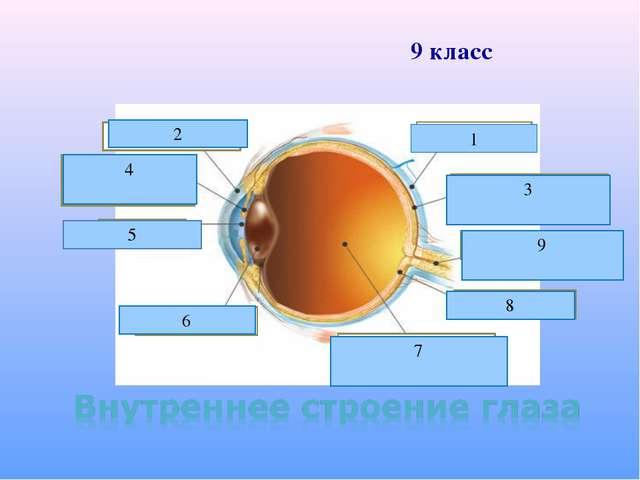 склера 1 роговица 2 сосудистая оболочка 3 зрачок 5 хрусталик 6 стекловидное т...