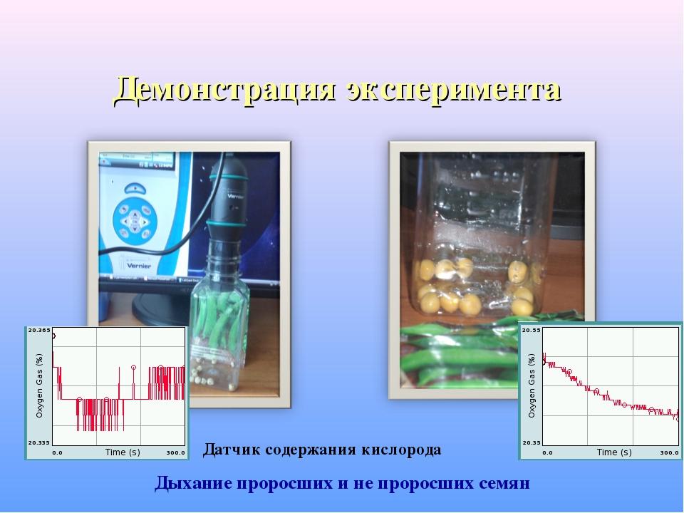 Демонстрация эксперимента Дыхание проросших и не проросших семян Датчик содер...