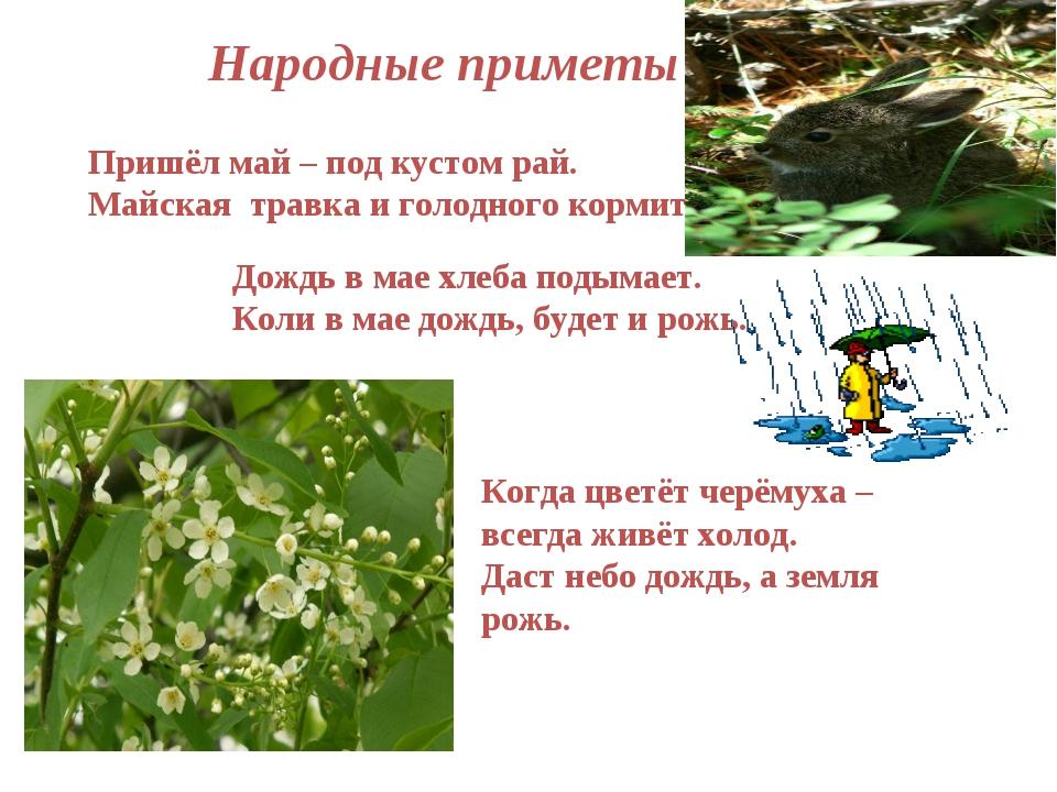 Народные приметы Пришёл май – под кустом рай. Майская травка и голодного корм...