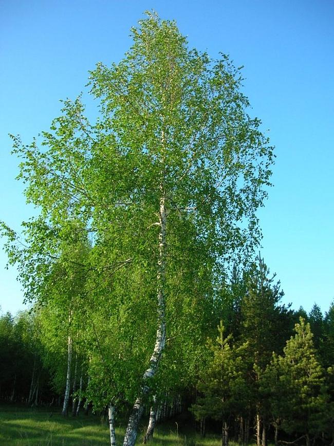 http://stat17.privet.ru/lr/0a0a4d26e9f4d06454d335bb3a2f9c13