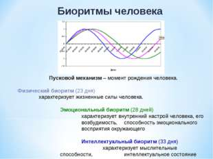 Биоритмы человека Пусковой механизм – момент рождения человека. Физический би