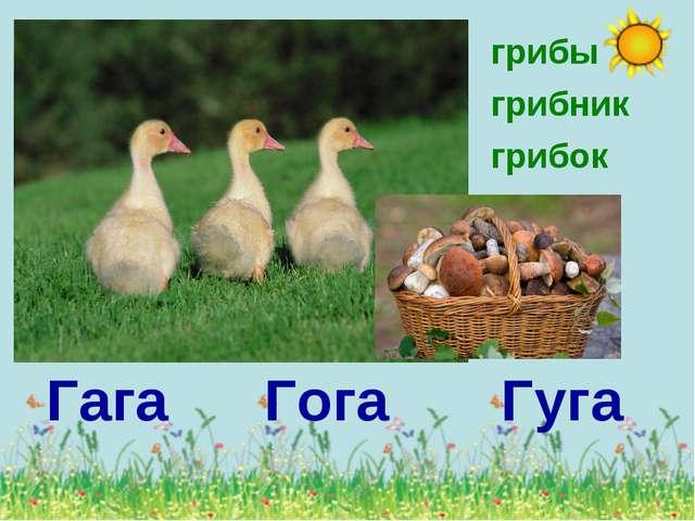 Гага Гога Гуга грибы грибник грибок