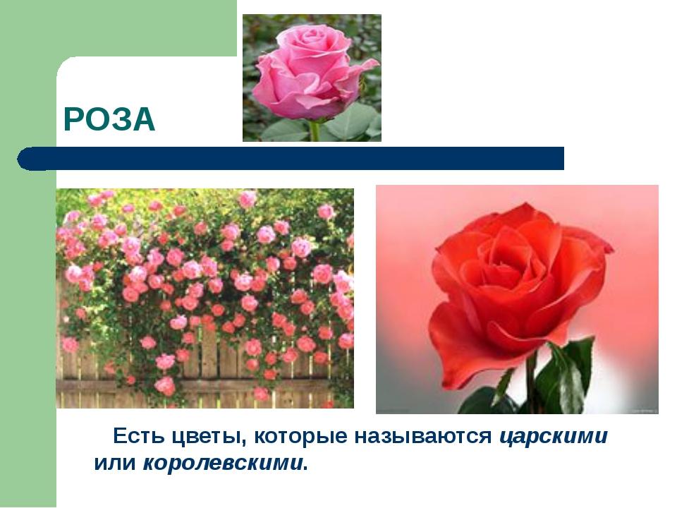 РОЗА Есть цветы, которые называются царскими или королевскими.