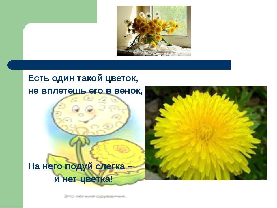 Есть один такой цветок, не вплетешь его в венок, На него подуй слегка – и нет...