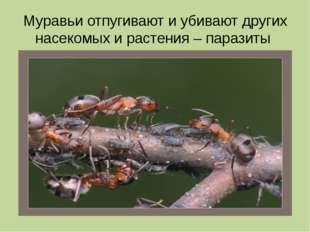 Муравьи отпугивают и убивают других насекомых и растения – паразиты