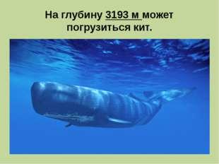 На глубину 3193 м может погрузиться кит.