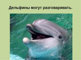 Дельфины могут разговаривать.