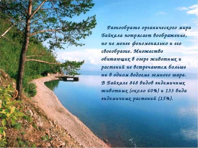 Разнообразие органического мира Байкала потрясает воображение, но не менее фе...