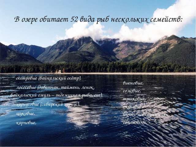 В озере обитает 52 вида рыб нескольких семейств: осетровые (байкальский осётр...