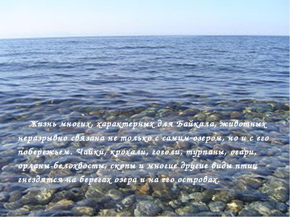 Жизнь многих, характерных для Байкала, животных неразрывно связана не только...