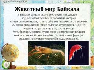 Животный мир Байкала В Байкале обитает около 2600видови подвидов водныхжив