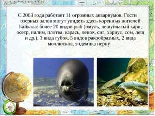С 2003 года работает 11 огромных аквариумов. Гости озерных залов могут увидет