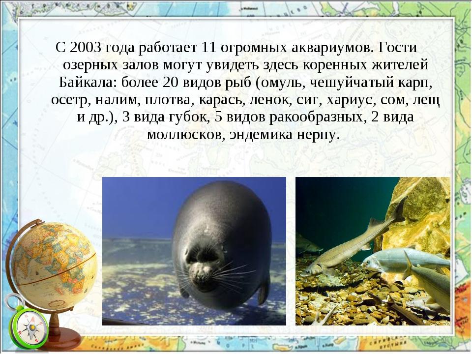С 2003 года работает 11 огромных аквариумов. Гости озерных залов могут увидет...