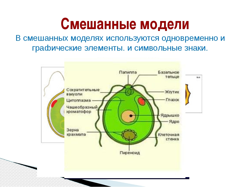 Смешанные модели В смешанных моделях используются одновременно и графические...