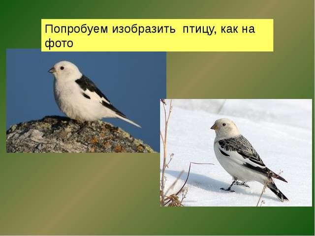 Попробуем изобразить птицу, как на фото