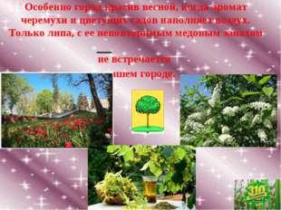 Особенно город красив весной, когда аромат черемухи и цветущих садов наполняе