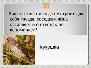 20 Какая птица никогда не строит для себя гнезда, соседкам яйца оставляет и о