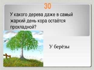 30 У какого дерева даже в самый жаркий день кора остаётся прохладной? У берёзы