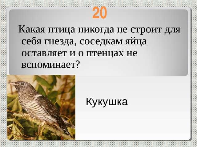 20 Какая птица никогда не строит для себя гнезда, соседкам яйца оставляет и о...