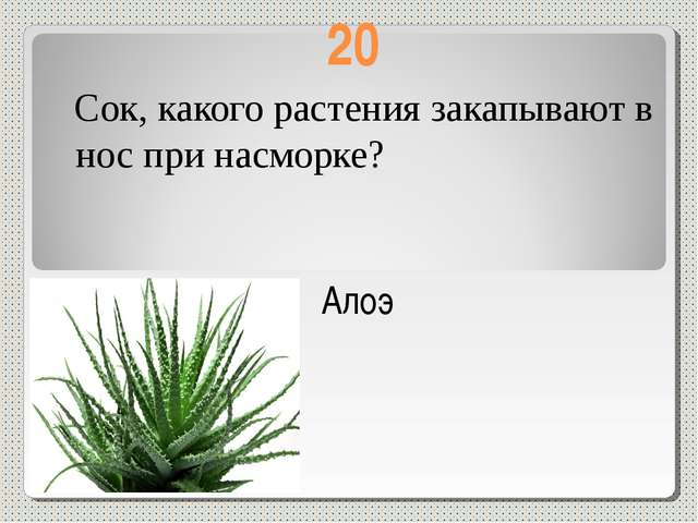 20 Сок, какого растения закапывают в нос при насморке? Алоэ