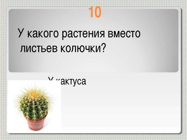 10 У какого растения вместо листьев колючки? У кактуса