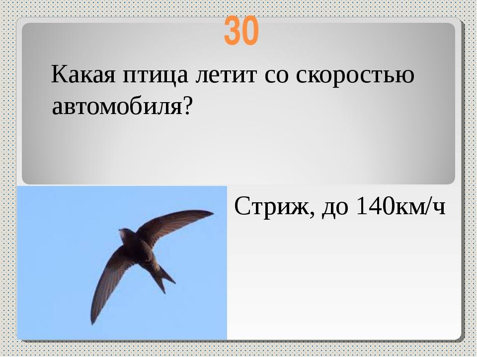 30 Какая птица летит со скоростью автомобиля? Стриж, до 140км/ч
