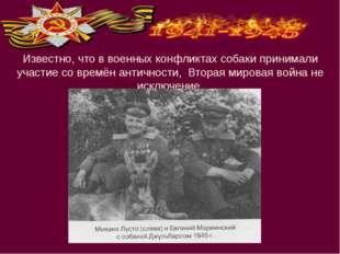 Известно, что в военных конфликтах собаки принимали участие со времён антично