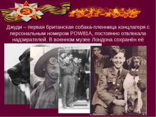 Джуди – первая британская собака-пленница концлагеря с персональным номером P