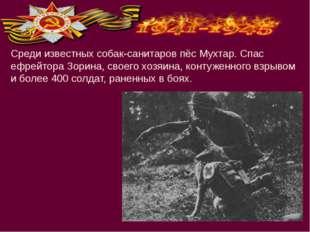 Среди известных собак-санитаров пёс Мухтар. Спас ефрейтора Зорина, своего хоз