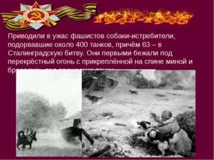 Приводили в ужас фашистов собаки-истребители, подорвавшие около 400 танков, п