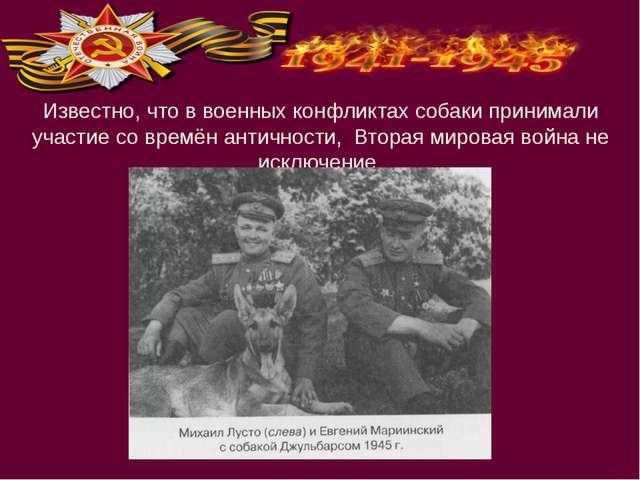 Известно, что в военных конфликтах собаки принимали участие со времён антично...