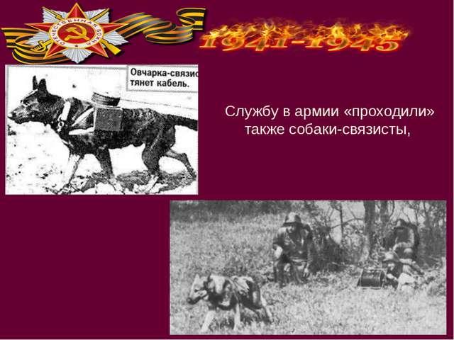 Службу в армии «проходили» также собаки-связисты,