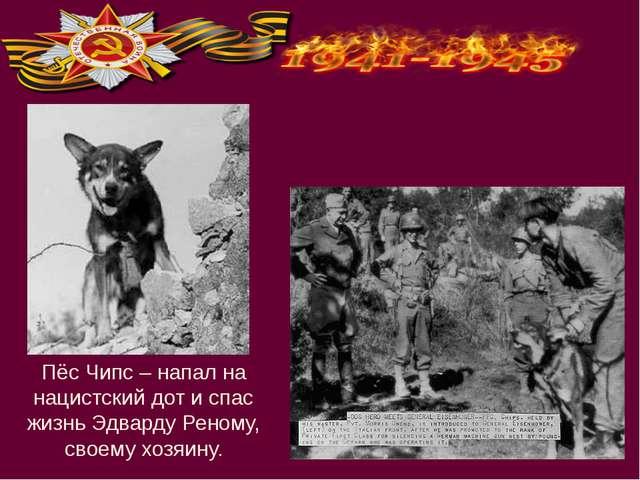 Пёс Чипс – напал на нацистский дот и спас жизнь Эдварду Реному, своему хозяину.