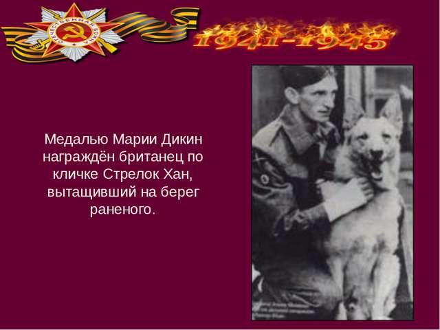 Медалью Марии Дикин награждён британец по кличке Стрелок Хан, вытащивший на б...