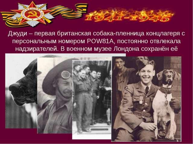 Джуди – первая британская собака-пленница концлагеря с персональным номером P...