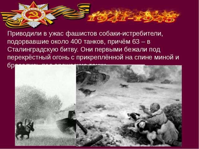 Приводили в ужас фашистов собаки-истребители, подорвавшие около 400 танков, п...