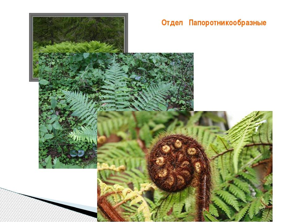Цветы оптом Горшечные растения уличные растения