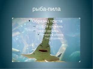 рыба-пила