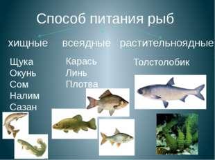Способ питания рыб хищные всеядные растительноядные Щука Окунь Сом Налим Саза