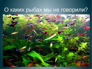 О каких рыбах мы не говорили?