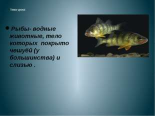 Тема урока: По земле не ходят, На небо не смотрят, Звёзд не считают, Людей н