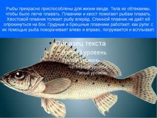 Рыбы прекрасно приспособлены для жизни вводе. Тела их обтекаемы, чтобы было л