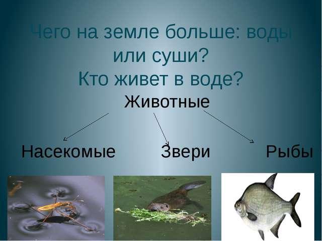 Чего на земле больше: воды или суши? Кто живет в воде? Животные Насекомые Зве...