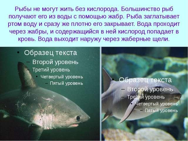 Рыбы не могут жить без кислорода. Большинство рыб получают его из воды с помо...