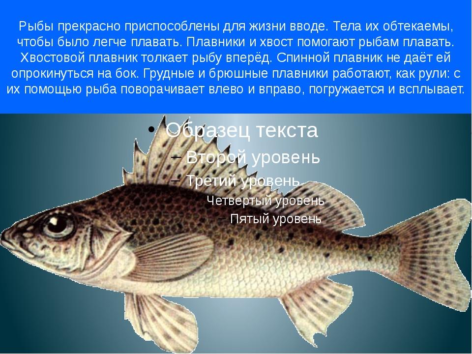 Рыбы прекрасно приспособлены для жизни вводе. Тела их обтекаемы, чтобы было л...