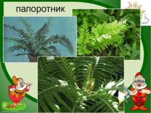 папоротник FokinaLida.75@mail.ru