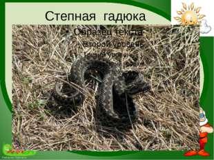 Степная гадюка FokinaLida.75@mail.ru