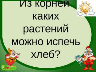 Из корней каких растений можно испечь хлеб? FokinaLida.75@mail.ru